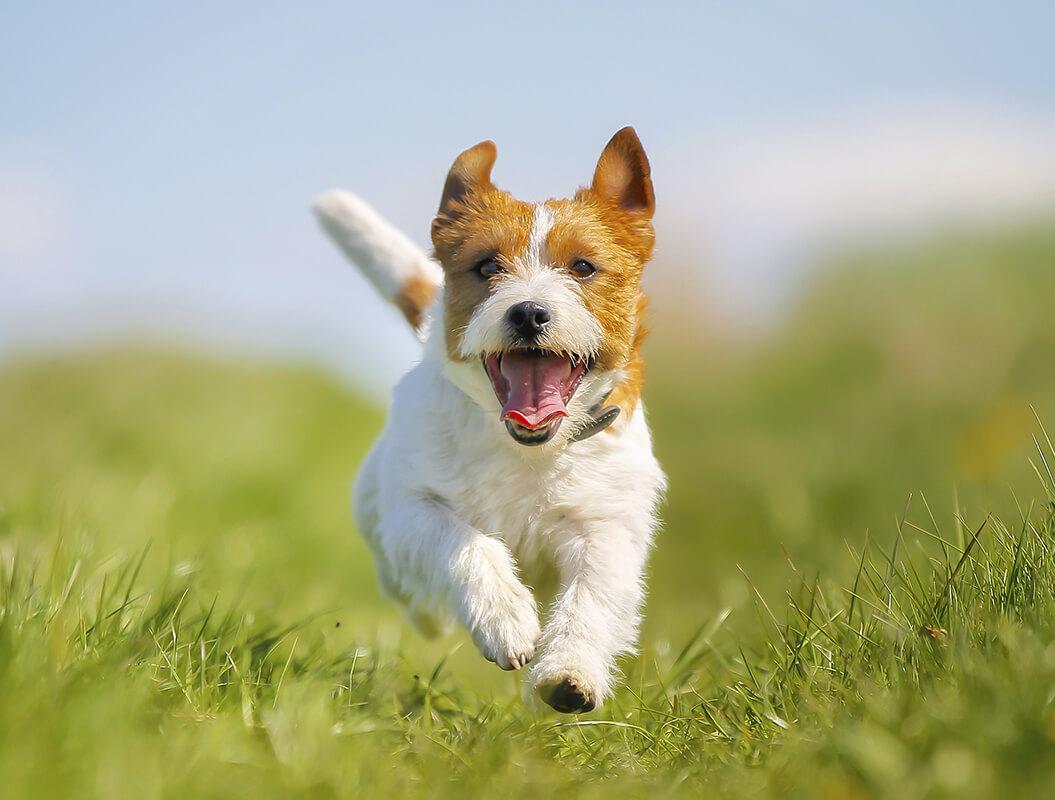 Картинки довольной собаки