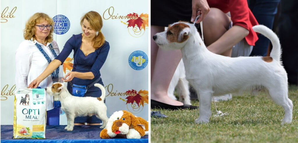 ELPIS STAR ANTEIY POWER OF LOVE dog show 2