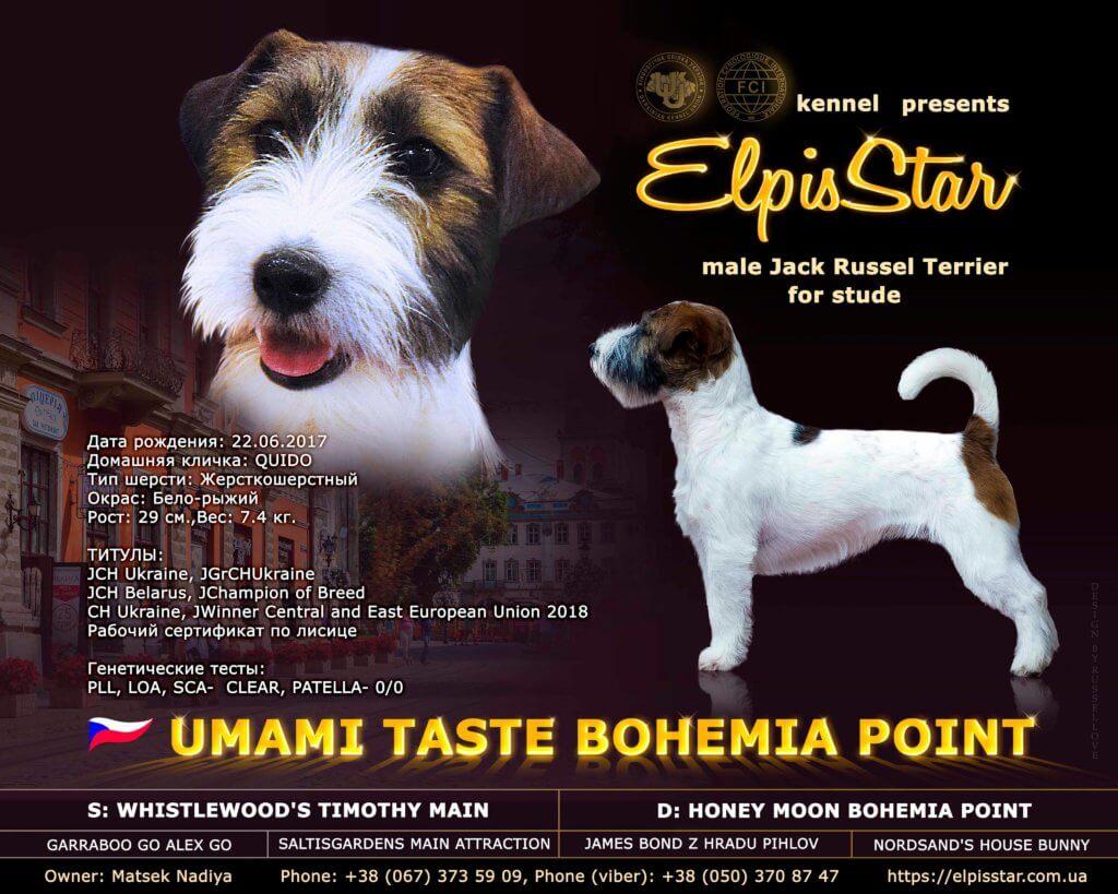 UMAMI TASTE BOHEMIA POINT (імпорт Чехія)
